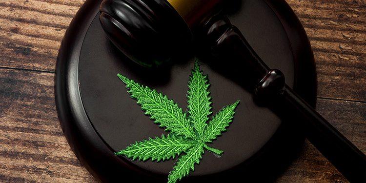 Mais juízes estão interessados na cannabis medicinal