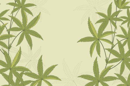 A cannabis além do CBD e THC