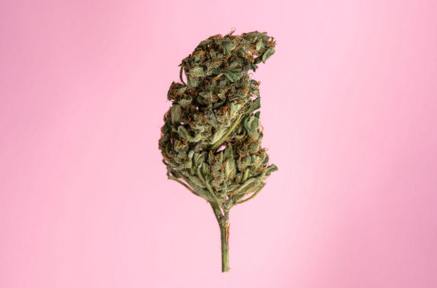 Mais portais estão falando de cannabis no Brasil, segundo estudo