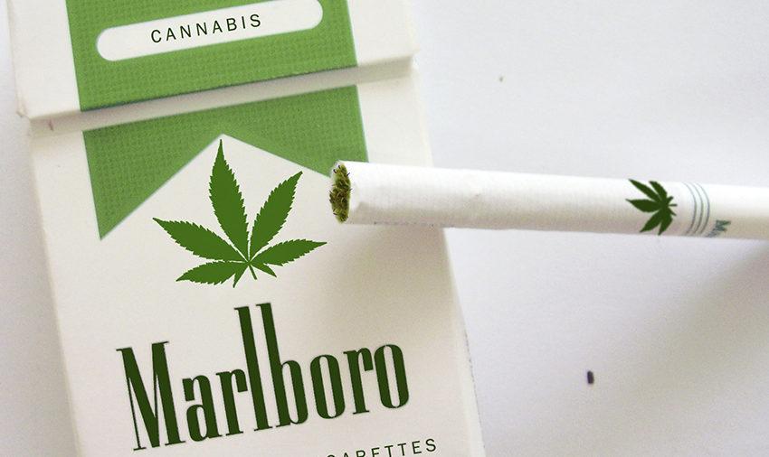 Fabricante de cigarro explora o universo canábico