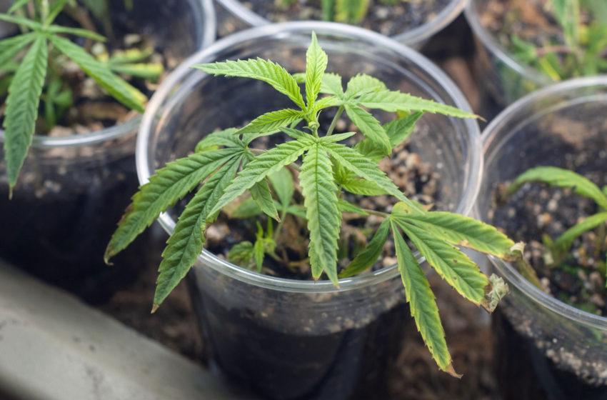 ABRACE desenvolverá clonagem de plantas: conheça o processo