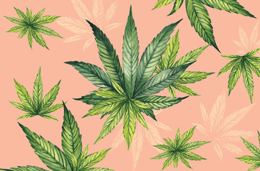West Virginia cria um programa para pacientes de cannabis medicinal