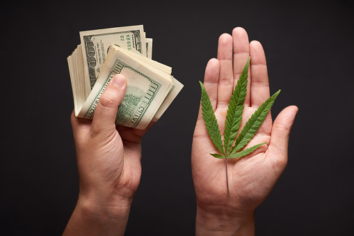 Two hands with cannabis and money. The concept of selling marijuana, hemp, drugs