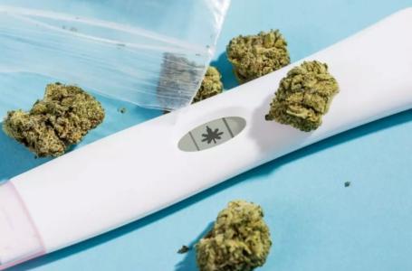 Anticoncepcionais e cannabis: essa dupla combina?