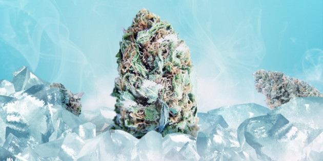 Cientistas afirmam que congelar a cannabis pode aumentar sua potência