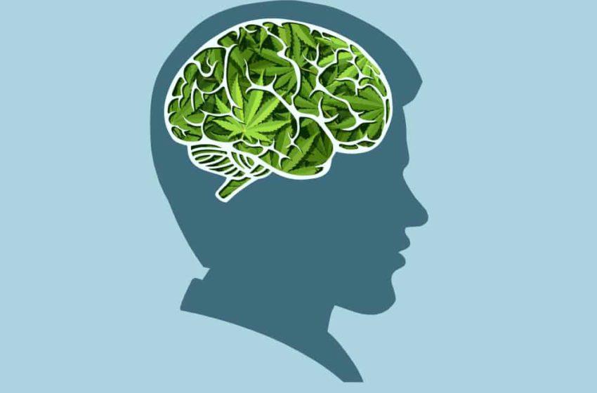 A cannabis afeta a memória?