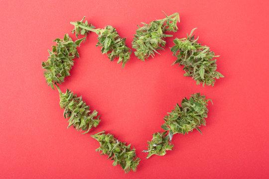 Estudo irá usar a cannabis para tratar insuficiência cardíaca
