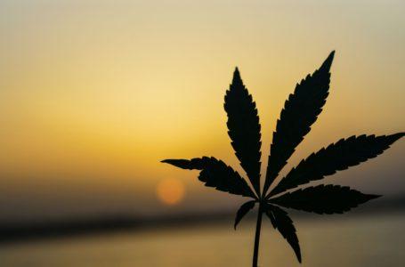 A cannabis afeta a concentração?