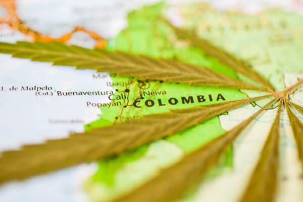 Colômbia legaliza exportação da cannabis e impulsiona a indústria
