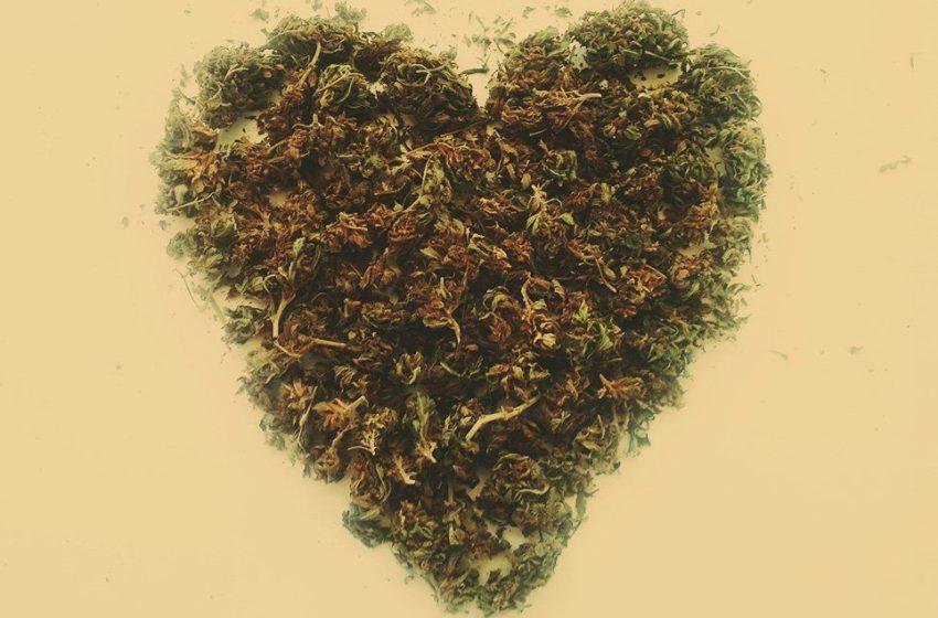 Estudo analisa a possível relação entre cannabis e infarto