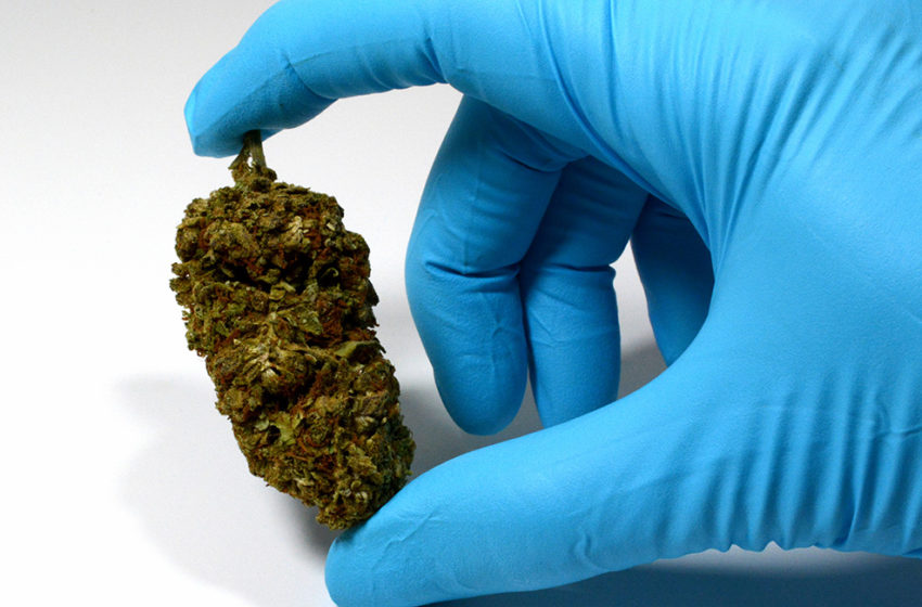 Mais dois estados estudam leis sobre a cannabis no Brasil