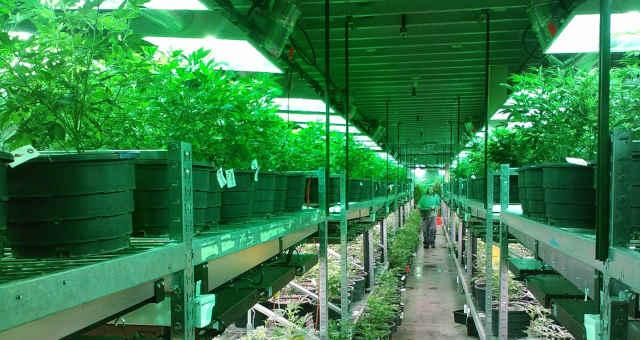 Conhecendo as fazendas de cannabis mais incomuns dos EUA